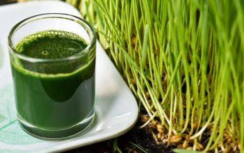 Juice of Wheatgrass