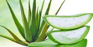 Try applying Aloe Vera