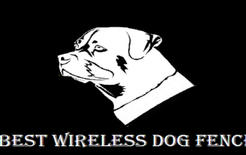 Best Wireless Dog Fence Electric Dog Fence