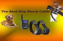 The best dog shock collars